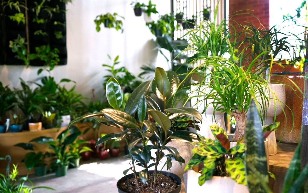 Plant Stores: A Pandemic's Saving Grace